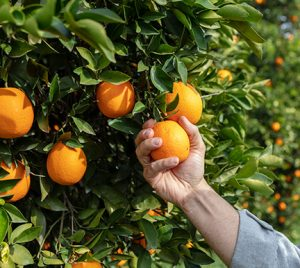 InfoJobs colabora con el sector agroalimentario en el reclutamiento de personal